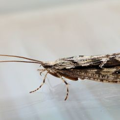 insect_macro_closeup_wings_nature_a_moth-1380121.jpg!d